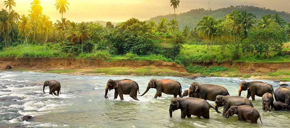 Nature & Wild Life