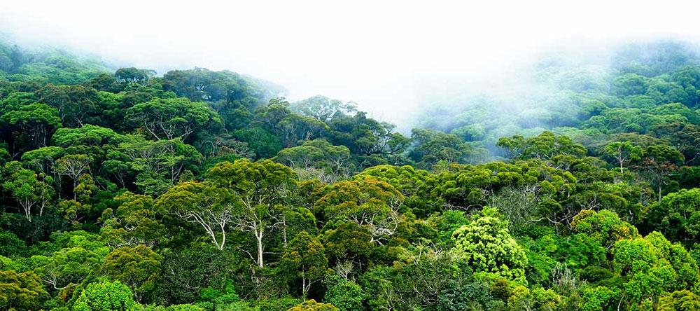 Sinharajah Rain Forest Reserve