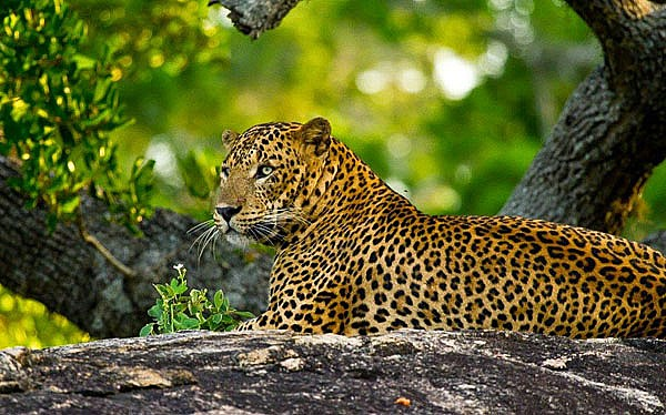 Wild life and Nature