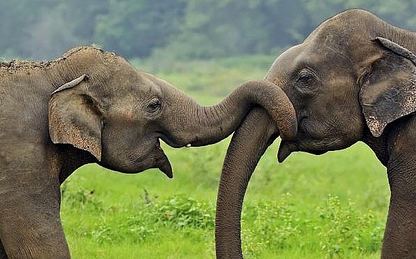 Explore Sri Lankan Wild Life