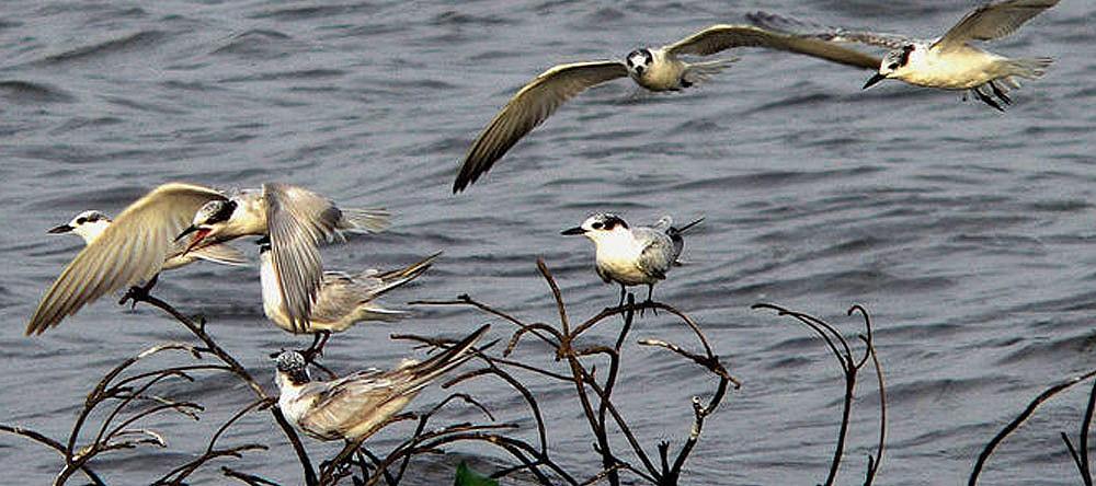 Muthurajawella bird sanctuary