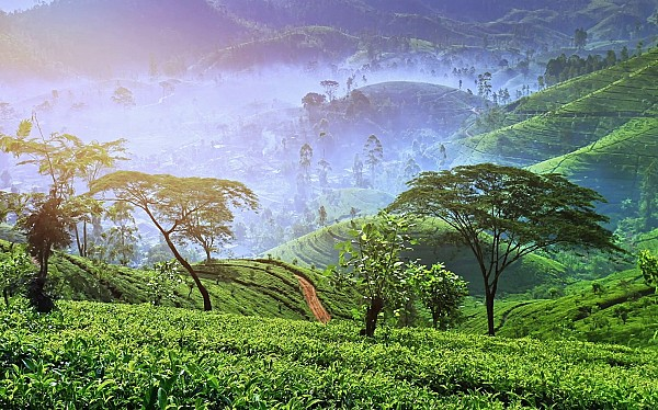 7 Best things to do in Nuwara Eliya