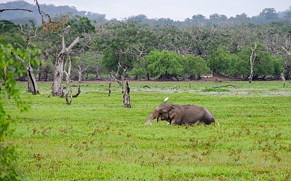 Yala Wildlife